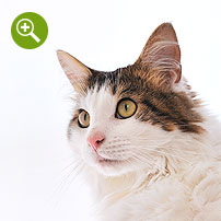動物撮影実例(猫)