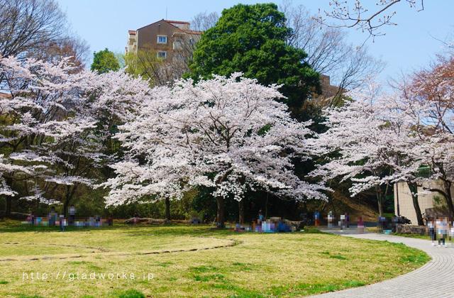 うずまき公園の桜