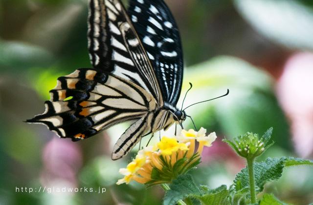 多摩動物公園の蝶