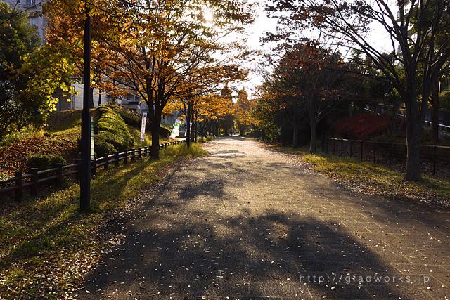 多摩ニュータウンの紅葉